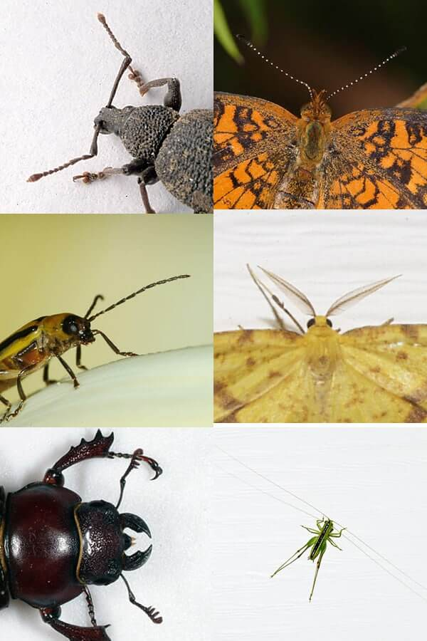 Böcek ile Mücadele Yöntemleri