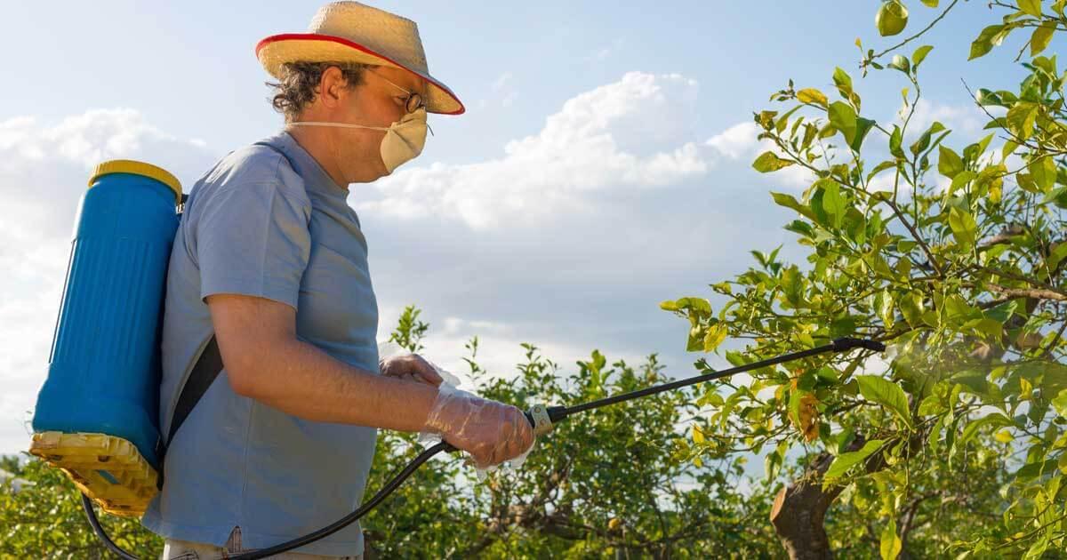 Böcek İlaçlama & Kemirgen Kontrol Servisi